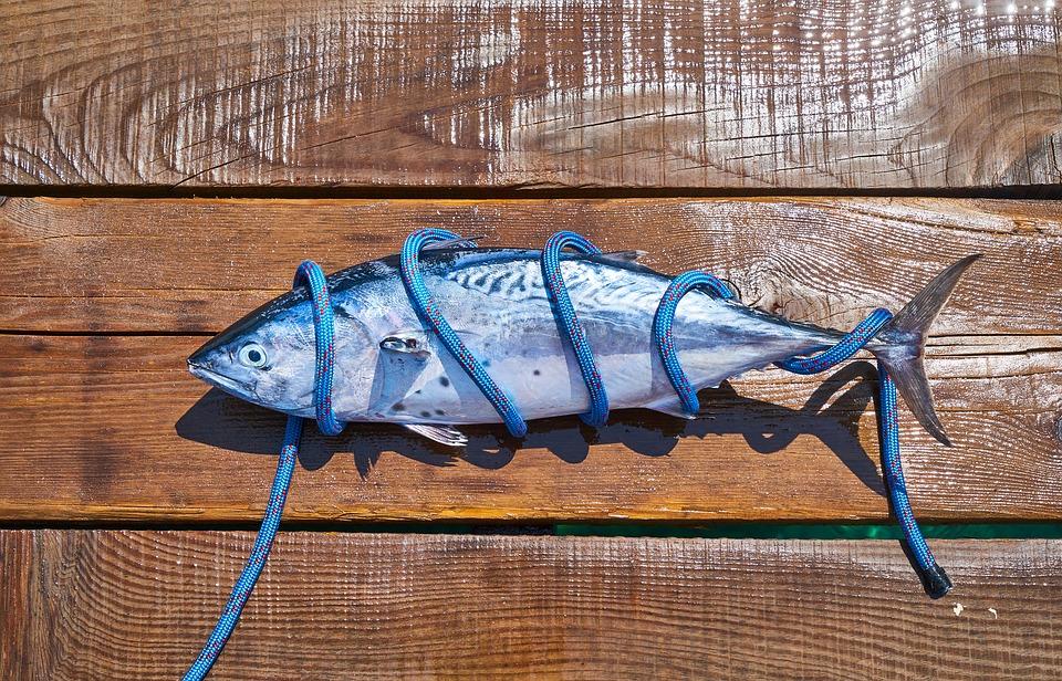 pesce da allevamento